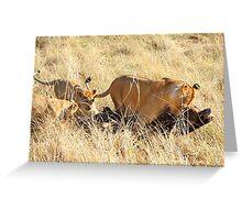 Lioness with Cubs, Moving a Wildebeest Kill, Maasai Mara, Kenya  Greeting Card