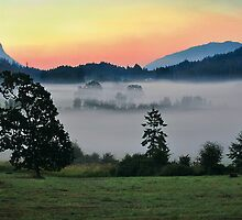 MORNING MIST by Sandy Stewart
