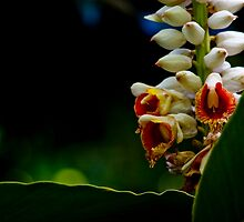 Images of the Tropical Far North Queensland pic 13 by Tony Lin