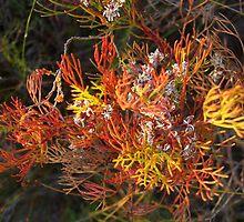 Autumn posy by Bruce Eitzen