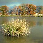 November by Lenka