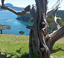 """A Gnarled Tree With a View"" by Lynn Bawden"
