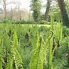 Ferns awaking  by Susie J