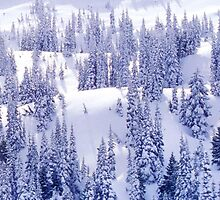 Olympic National Park in Snow by Vicky Brago-Mitchell