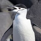 "Chinstrap Penguin ~ ""The Geologist"" by Robert Elliott"