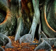 Moreton Bay Fig by Damiend