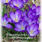 Spring purple flowers by Kadava