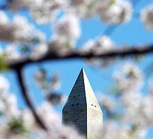 Washington Monument - Cherry Blossoms by wyllys