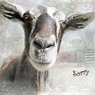 """Goat- """"Sorry"""" ~ Greeting Card by Susan Werby"""