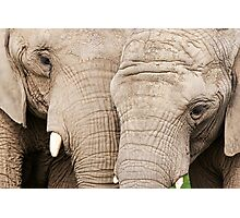 Elephants Photographic Print