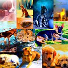 Dog Calendar by Nancy Stafford