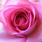 Pink Perfection by Susan E. King