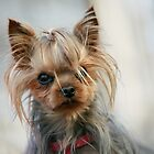 Bad hairday :) by JudyBJ