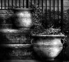 Two pots of ivy by Mike  Savad