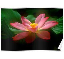 Lotus #18 Poster