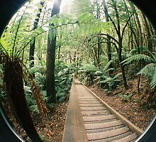 Rainforrest Walkway  by Gavin  Diamond