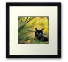 Black Drop Framed Print