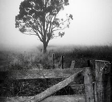 Tree In Mist by Ben Ryan