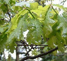 oak leaves by MelanieB