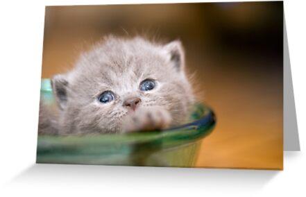 kitty by Victor Bezrukov