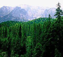 Alpine Forest by kevin smith  skystudiohawaii