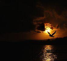 Silhouette Gull by Wanagi Zable-Andrews