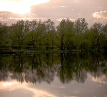 Reflections by Stephen  Smith
