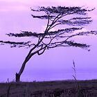 Solitude by maliaio