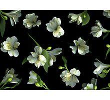 Harmony Photographic Print