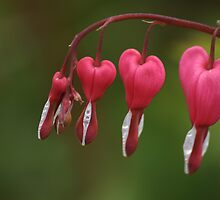 My Heart Will Go On ......... by godders
