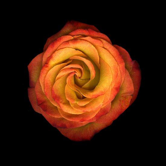 La Vie En Rose by Christian Slanec   FineArt Studio
