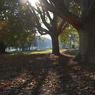 Sunlight through the leaves by AnandaSim
