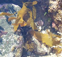 interesting items in the rockpool by gaylene