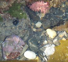 colourful bits and pieces in the tidal rockpool by gaylene