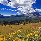 Rocky Mountain WIldflowers by John  De Bord Photography