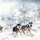 Huskies Sledge In Germany by Goodaboom
