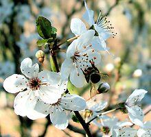 downunder bee by Jan Stead JEMproductions