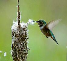 Building Her Nest by David Friederich