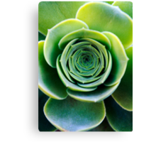 Green houseleek     Canvas Print