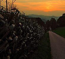 Cornfields with sundown   landscape photography by Patrick Jobst