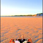 Getting Crabby by Rochelle Boardman