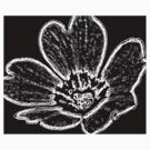 Abstract Flower Black and White by Rebecca Silverman