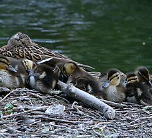 Mum & babies have a snuggle by Sharon Perrett