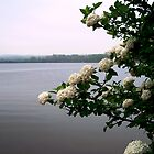 Flowers view of the lake by Judi Taylor