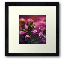 Springy. Framed Print