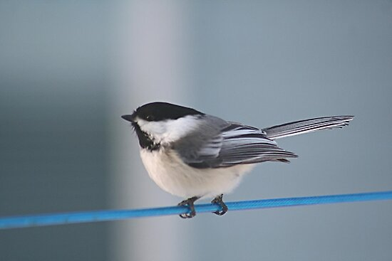 Bird on a wire by Stephen Thomas
