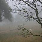 Foggy morn on the Otway by oiseau