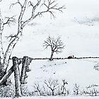 Twin Birch Fence Line by Jack G Brauer