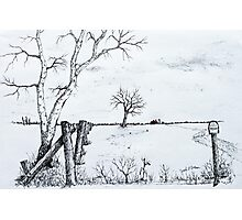 Twin Birch Fence Line Photographic Print