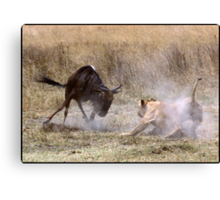 Face-off! Canvas Print